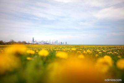 Dandy Chicago Skyline 4169