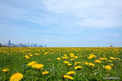 Dandy Chicago Walk 4185