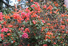 Flowering shrubs...
