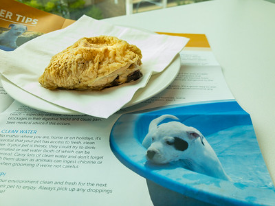 Thursday lunch. Leftover chicken thigh while reading the latest RSPCA newsletter.