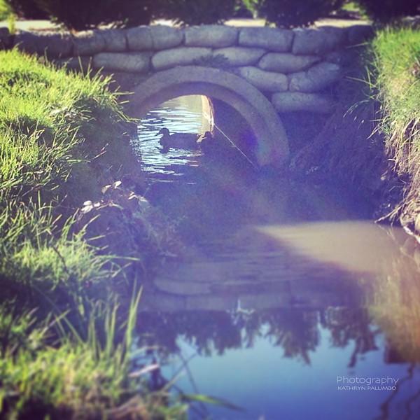 Ducks Under the Culvert
