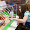 The Fitchburg Public Libray's chicks that hatched last week are now in a bigger cage for everyone to see. They will be at the Library for a couple of weeks and then go back to farm they came from. Isabella velazquez, 8, from Fitchburg tries to get a good look at the day and a half old chicks on Thursday, July 20, 2017. SENTINEL & ENTERPRISE/JOHN LOVE