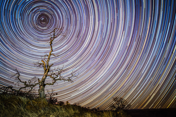 Old Man Oak Star Trails