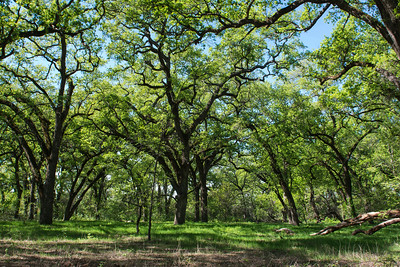 Lower Bidwell Park Chico, California