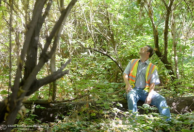 City of Chico Urban Forest Manager Richie Bamlet sits among the trees in Bidwell Park near Caper Acres Tuesday, July 10, 2018. Bamlet wrote a grant application that landed a $426,000 grant from Cal Fire. The grant will help the city with a tree inventory, including checking and planting trees in Bidwell Park.  (Bill Husa -- Enterprise-Record)