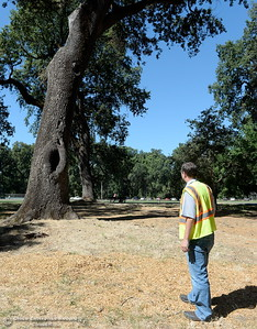 City of Chico Urban Forest Manager Richie Bamlet measures trees in Bidwell Park near Caper Acres Tuesday, July 10, 2018. Bamlet wrote a grant application that landed a $426,000 grant from Cal Fire. The grant will help the city with a tree inventory, including checking and planting trees in Bidwell Park.  (Bill Husa -- Enterprise-Record)
