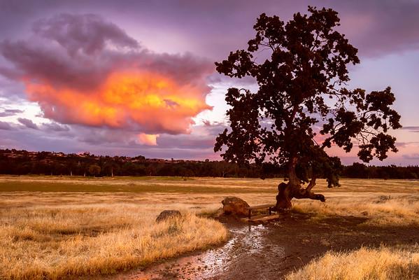 Start of North Rim Trail, Upper Bidwell Park, Chico, CA
