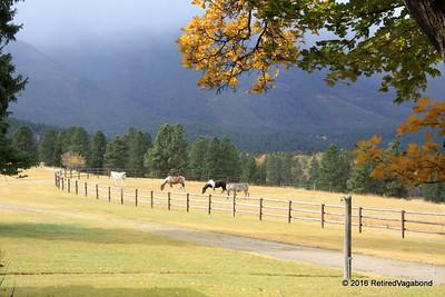 2012 1016 RanchVisit (13)