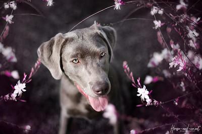 Twix dans les fleurs