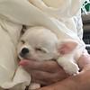 Reggie - 2 months old