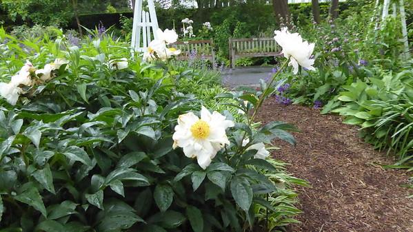 Chihuly Botanical Gardens