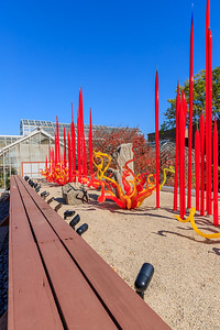 'Red Reeds & Sunset Sprays' By Dale Chihuly