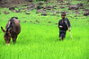 Ethiopian Boy Taking Care of Donkey