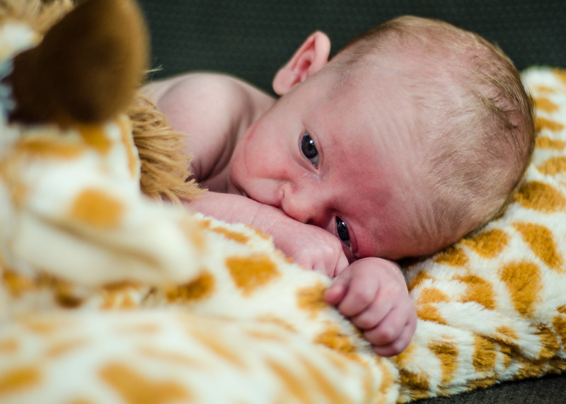 Photo of newborn on toy giraffe