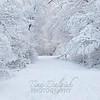 6921489-white-wonderland-wallpaper