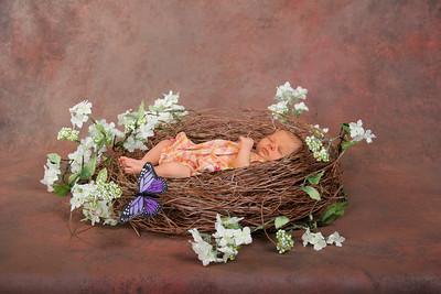 Butterfly Bird Nest