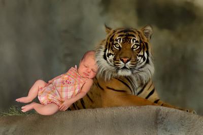 052505_1215PM-CRW_6708 tigre eleanore