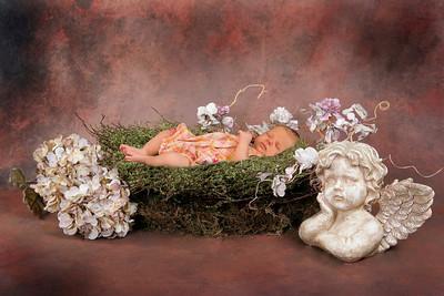 Hydrangea and Angel Nest
