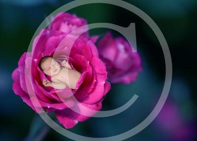 G201__flower43a