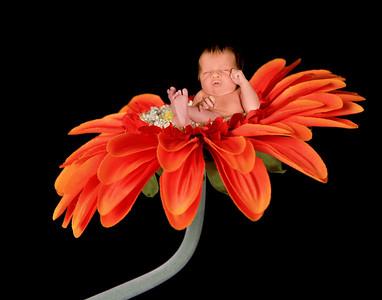 FloralFantasyVol117 veronica