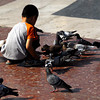 A boy feeds the pidgeons at Plaka Catalunya, Barcelona, Spain.