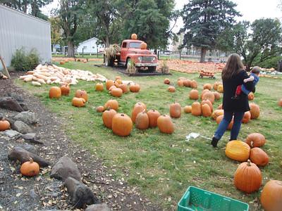 10-28-12 pumpkin patch