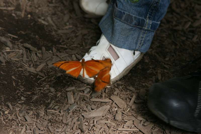 Butterflies on Hannah shoe