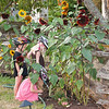Kaitlyn, Hannah and Aaron watering the sunflowers