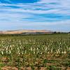 Yakima scenery