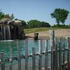 Elephant done taking bath - IT WAS HOT! 6/26