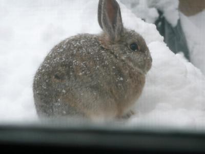 Marmee's Bunny