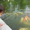 Feeding the fish!