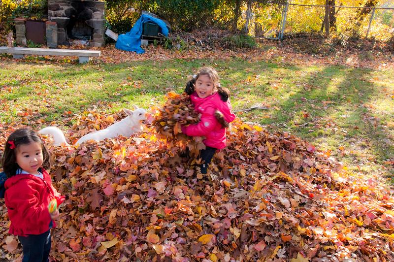 Autumn_Leaves_10