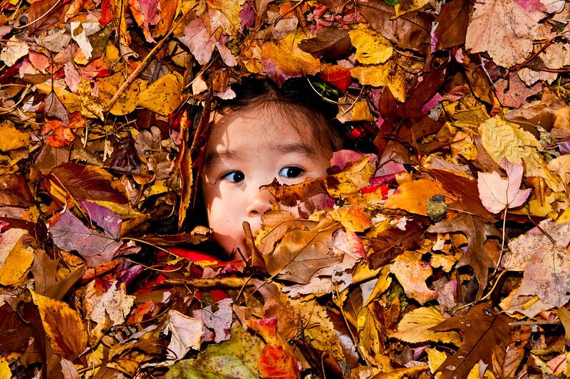 Autumn_Leaves_06