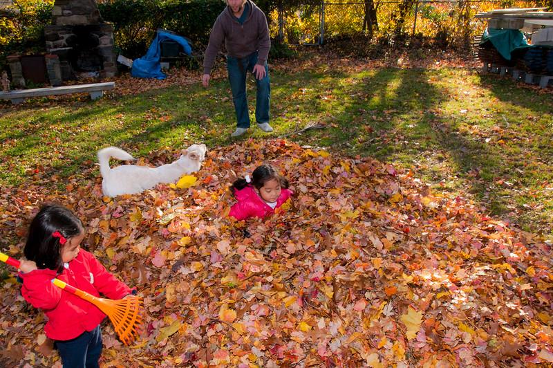 Autumn_Leaves_07