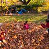 Autumn_Leaves_14