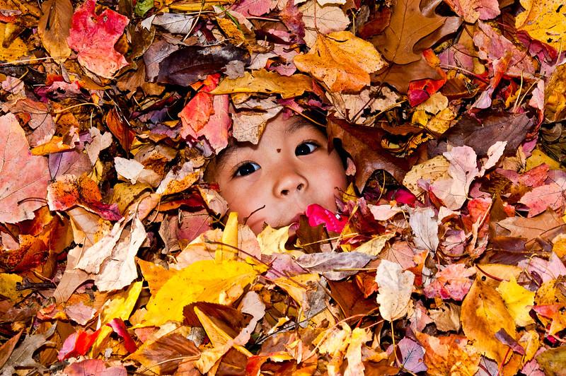 Autumn_Leaves_05