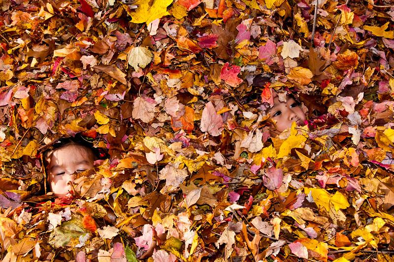 Autumn_Leaves_03