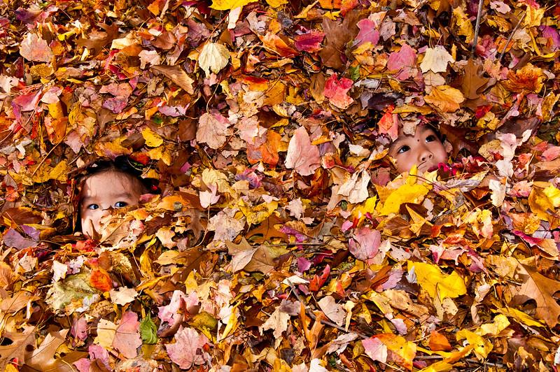 Autumn_Leaves_04