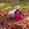 Autumn_Leaves_16