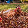 Autumn_Leaves_11