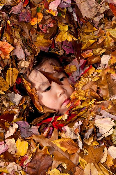 Autumn_Leaves_02