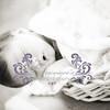 BabySouleiaNewborn008