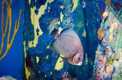 Camden Aquarium