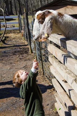 Ticonderoga Farms