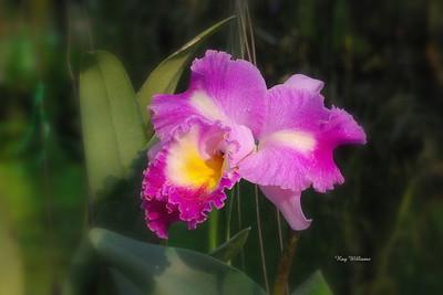 Ray Williams, ...     Thailand ..... so beautifull ....