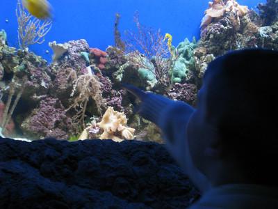 Christmas Program and Aquarium 065