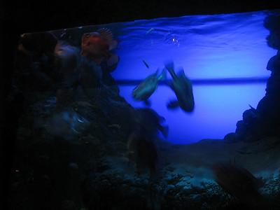 Christmas Program and Aquarium 067