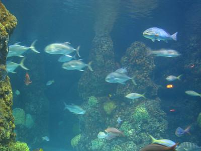 Christmas Program and Aquarium 068