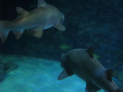 Christmas Program and Aquarium 092